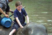 เลี้ยงช้าง ดูแลช้าง Baan Chang Elephant Park
