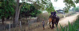 ทัวร์เลี้ยงช้าง ดูแลช้าง Baan Chang Elephant Park