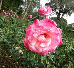 สวนดอกไม้เมืองหนาว พระตำหนักภูพิงค์ doi suthep temple bhubing palace tour