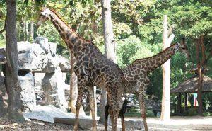 สวนสัตว์เชียงใหม่ ซู อควาเรียม