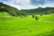 ทุ่งนาขั้นบันได บนดอยอินทนนท์ doi inthanon national park chiang mai