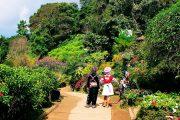สวนดอกไม้ บ้านม้งดอยปุย doi suthep temple hmong village tour