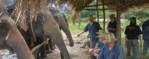 ทัวร์เลี้ยงช้าง อาบน้ำช้าง Panda Elephant Camp เชียงใหม่