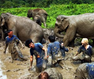 เลี้ยงช้าง ดูแลช้าง เชียงใหม่