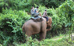 เดินป่า ขี่ช้าง ล่องแก่ง เชียงใหม่