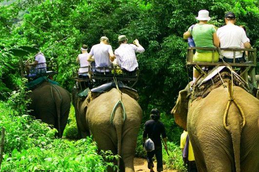 ทัวร์ปางช้าง