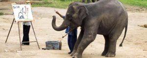 ชมการแสดงช้างแสนรู้