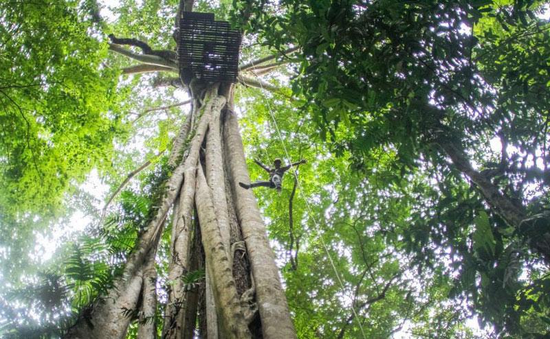 โหนสลิง Flight of the Gibbon แม่กําปอง เชียงใหม่