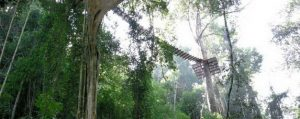 ทัวร์โหนสลิง Flight of the Gibbon แม่กําปอง เชียงใหม่