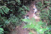 เส้นทางเดินป่า ดอยสุเทพ