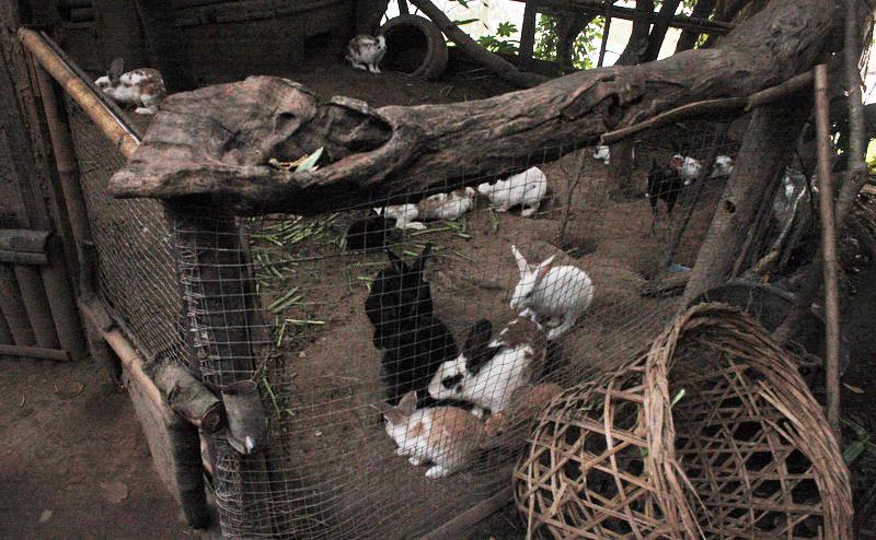 กรงเลี้ยงกระต่าย ที่บ้านชาวนา maeping river cruise