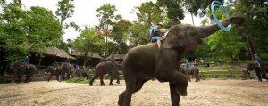 ปางช้างแม่สา เชียงใหม่
