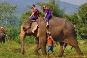 เดินเล่นกับช้างแบบธรรมชาติ