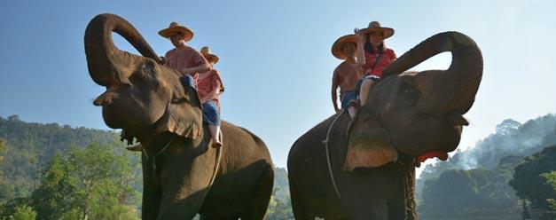ทัวร์เลี้ยงช้าง ดูแลช้าง Ran-Tong Elephant Center เชียงใหม่