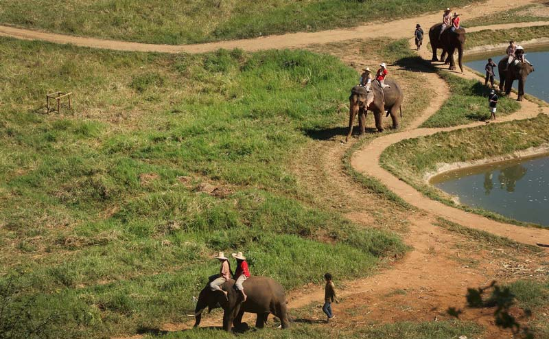 เลี้ยงช้าง ดูแลช้าง Ran-Tong Elephant Center