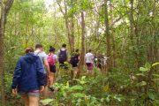 ทัวร์เดินป่า ล่องแพไม้ไผ่ แม่วาง เชียงใหม่