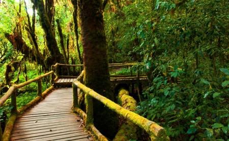 เส้นทางเดินศึกษาธรรมชาติอ่างกา ดอยอินทนนท์