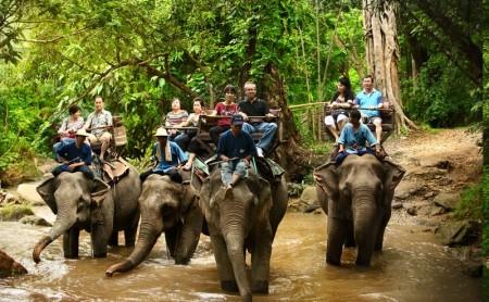 ขี่ช้าง ปางช้างแม่สา แม่ริม เชียงใหม่