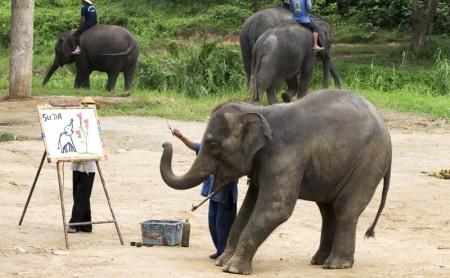 ช้างวาดรูป ปางช้างแม่แตง เชียงใหม่