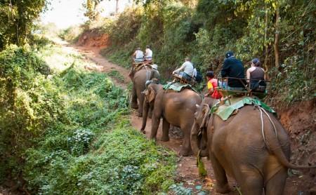 นั่งช้าง ปางช้างแม่แตง เชียงใหม่