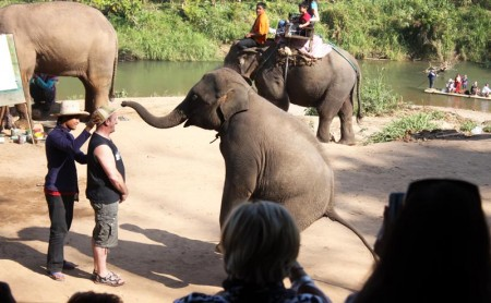 การแสดงช้างแสนรู้ ปางช้างแม่แตง เชียงใหม่