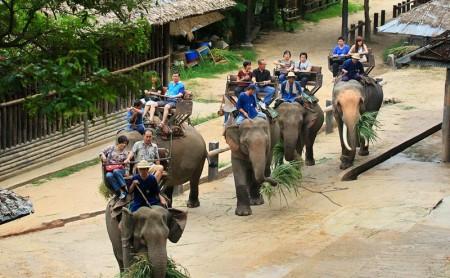 นั่งช้าง ปางช้างแม่สา แม่ริม เชียงใหม่