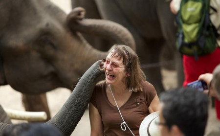 ปางช้างแม่สา แม่ริม เชียงใหม่